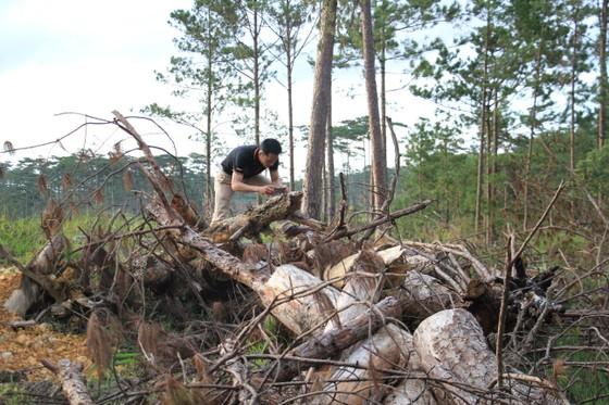 Khởi tố bị can phá gần 4ha rừng thông, chiếm đất ảnh 4
