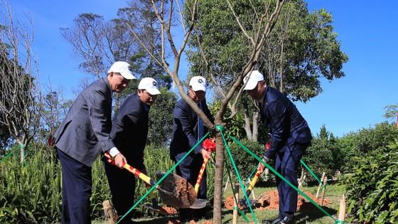 Trồng mới 125 cây hoa anh đào Nhật Bản tại Đà Lạt ảnh 1