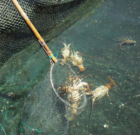 Tảo độc xuất hiện dày đặc trên vịnh Vân Phong ảnh 2