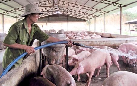 """Giá thịt heo """"nhảy múa"""", Bộ trưởng Bộ NN-PTNT trình Quốc hội dự án Luật Chăn nuôi ảnh 2"""