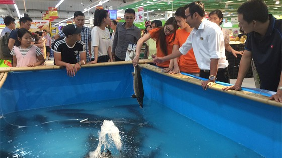 Lần đầu tiên có tuần lễ cá sông Đà ở Hà Nội ảnh 1