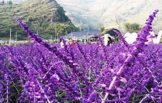 """Nhiều nơi trồng hoa để """"tự sướng"""", thu 20-30 triệu đồng/ngày ảnh 1"""