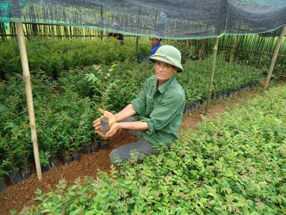 Xuất siêu hơn 4 tỷ USD, cả nước trồng thêm 137.000ha rừng để xuất khẩu ảnh 1