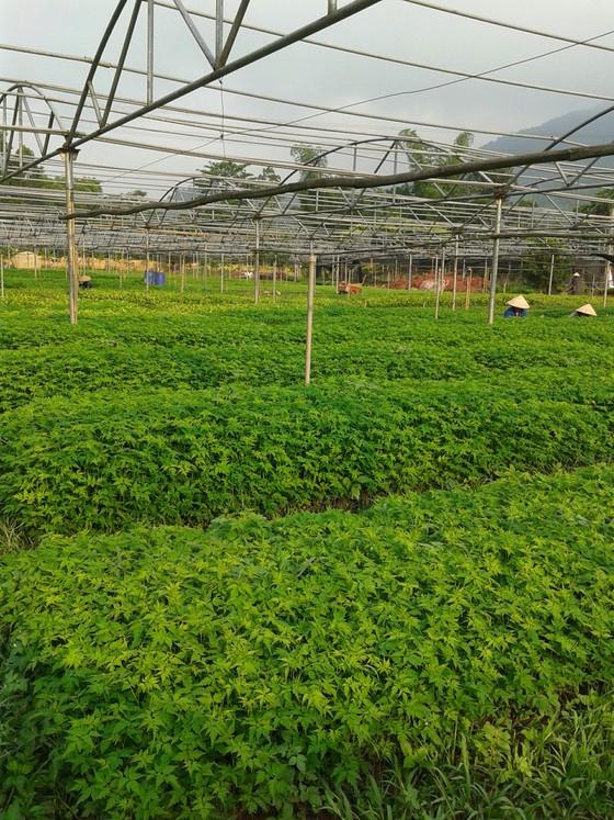 Xuất siêu hơn 4 tỷ USD, cả nước trồng thêm 137.000ha rừng để xuất khẩu ảnh 2