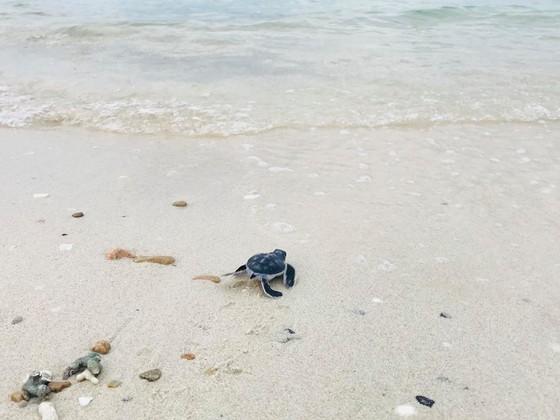 Thả 51 con rùa con về với biển ảnh 3