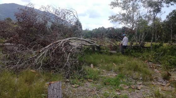 Đề nghị khởi tố vụ án phá rừng trong khu bảo tồn thiên nhiên Tà Cú ảnh 4
