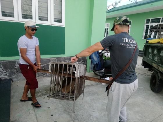 Giải cứu cá thể khỉ đuôi lợn quý hiếm bị rao bán trên mạng xã hội  ảnh 1