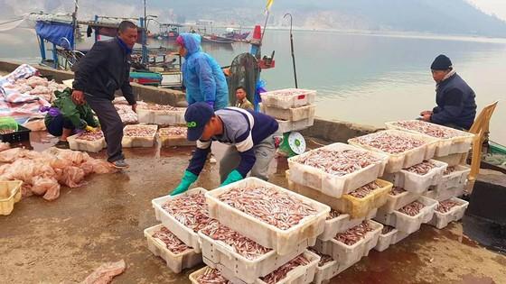 Nhiều ngư dân Bắc miền Trung tiếp tục trúng đậm cá trích, cá cơm biển ảnh 2