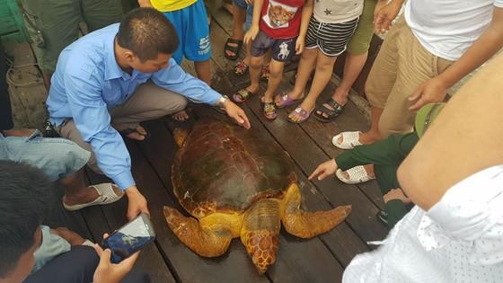 Thả rùa biển quý hiếm về lại môi trường tự nhiên ảnh 3