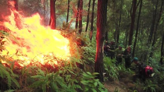 Nhiều diện tích rừng thông ở Hà Tĩnh bị cháy ảnh 1