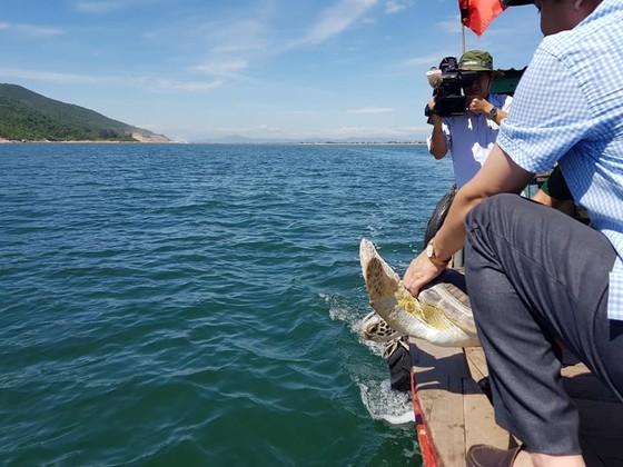 CLIP: Thả rùa biển 40kg về lại môi trường tự nhiên ở Hà Tĩnh ảnh 2