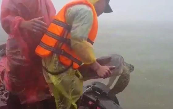 Thả cá thể rùa biển nặng 22kg về lại môi trường tự nhiên ảnh 3