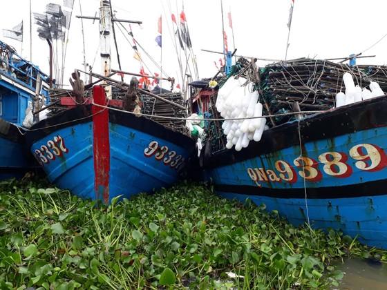 """Bạt ngàn cây bèo """"bủa vây"""" cảng cá lớn nhất ở Hà Tĩnh ảnh 3"""
