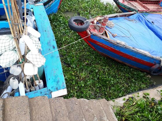"""Bạt ngàn cây bèo """"bủa vây"""" cảng cá lớn nhất ở Hà Tĩnh ảnh 2"""