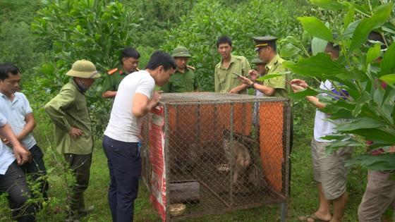 Hà Tĩnh: Thả 4 cá thể động vật hoang dã về lại môi trường tự nhiên ảnh 1