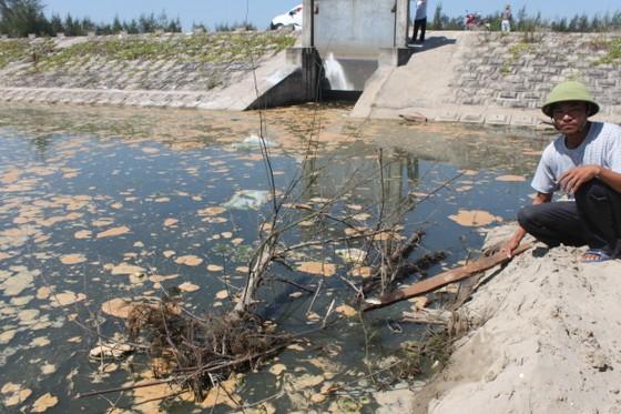 Phạt 435 triệu đồng dự án nuôi tôm xả thải gây ô nhiễm môi trường  ảnh 1