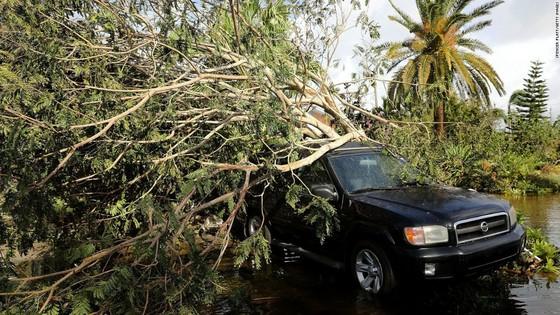 Florida tan hoang sau bão Irma ảnh 9
