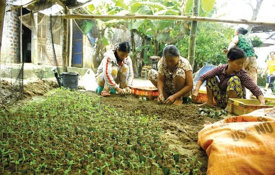 Nông dân miền Trung chuẩn bị vào mùa sau lũ bão ảnh 2