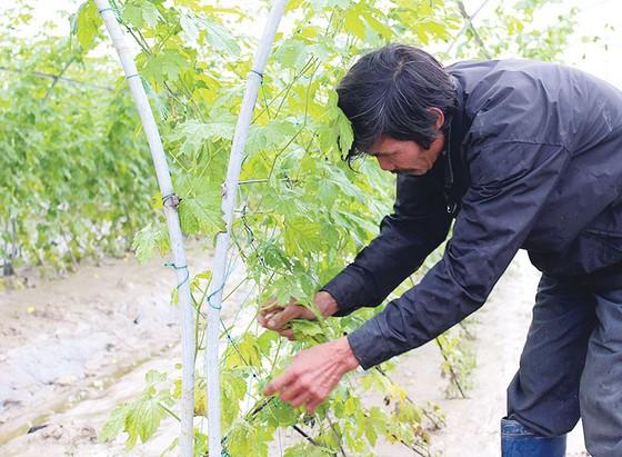 Nông dân miền Trung chuẩn bị vào mùa sau lũ bão ảnh 5
