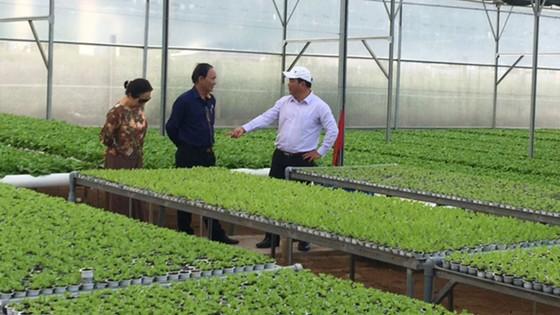Những trang trại rau sạch  ảnh 1