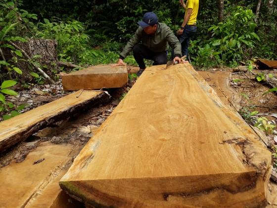 Công ty trồng rừng cưa cây tự nhiên ảnh 1