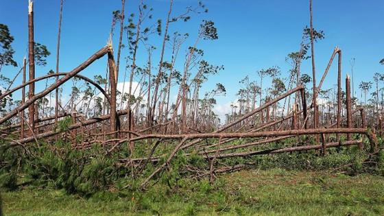 Siêu bão Michael tấn công Florida: 17 người chết, một căn cứ quân sự bị san bằng, cả thị trấn bị xóa sổ ảnh 34