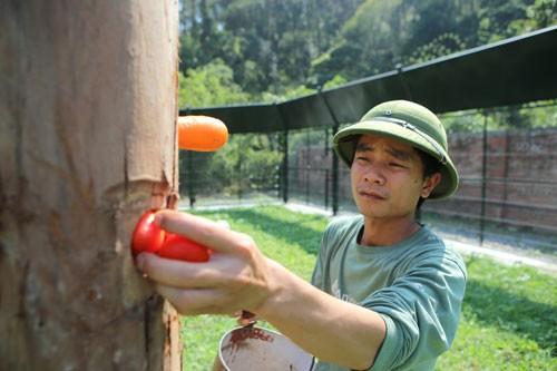 Hoàn tất dự án Trung tâm Cứu hộ gấu Việt Nam ảnh 5