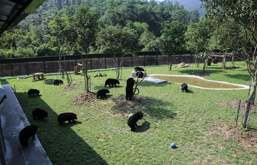 Hoàn tất dự án Trung tâm Cứu hộ gấu Việt Nam ảnh 4