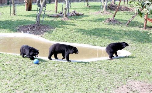 Hoàn tất dự án Trung tâm Cứu hộ gấu Việt Nam ảnh 6
