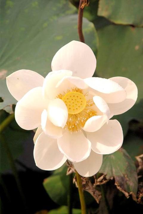 Chiêm ngưỡng khu đầm 12 loại sen quý gần Hà Nội ảnh 12