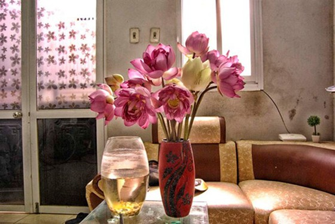Chiêm ngưỡng khu đầm 12 loại sen quý gần Hà Nội ảnh 14