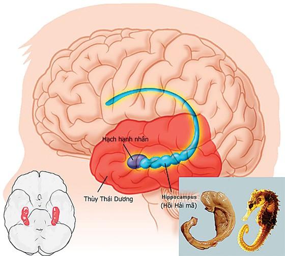 Nấm đầu khỉ Hericium:   Hướng đi mới cho việc cải thiện chất lượng trí não ảnh 1