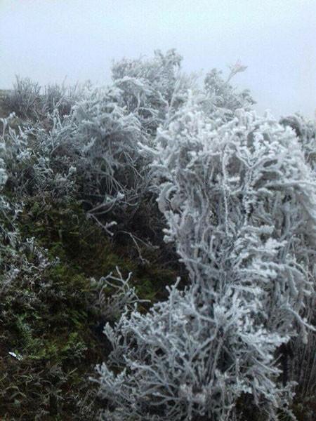 Không khí lạnh bao phủ miền Bắc và miền Trung ảnh 1