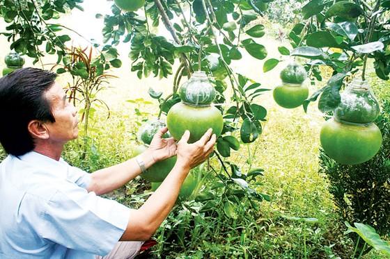 Nông sản được giá, nông dân ăn tết lớn ảnh 1