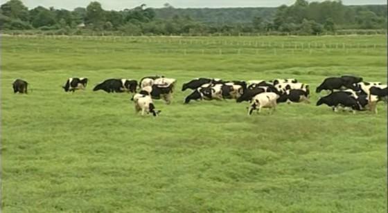 Hiệu quả giao khoán đất nông nghiệp của SAGRI không cao ảnh 1