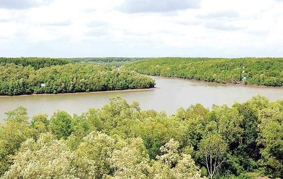 40 năm phục hồi thành công rừng ngập mặn Cần Giờ ảnh 1