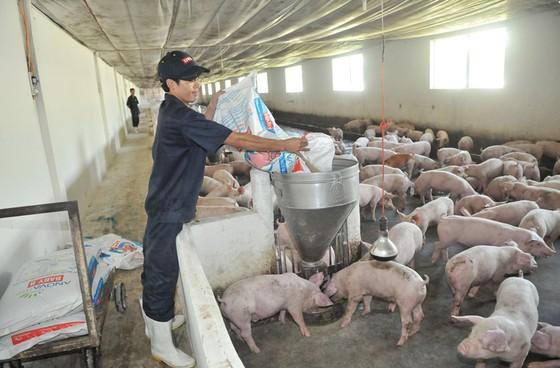 Đổi mới tư duy để phát triển ngành chăn nuô ảnh 1