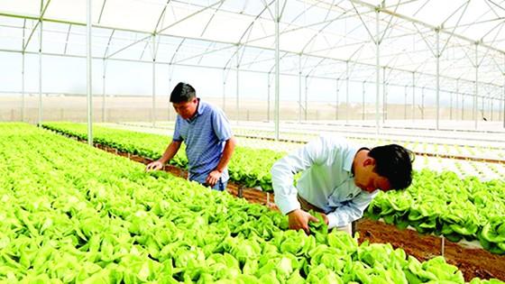 Tăng cường hỗ trợ sản xuất và phân phối thực phẩm an toàn ảnh 1