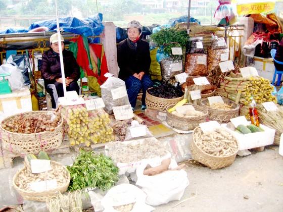 """Bảo tồn và phát huy giá trị cây thuốc Việt - Bài 1: """"Vàng xanh"""" đang cạn kiệt ảnh 1"""