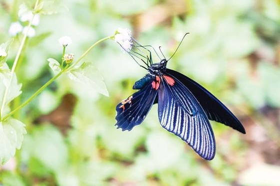 Ngắm bướm ở Mã Đà ảnh 5