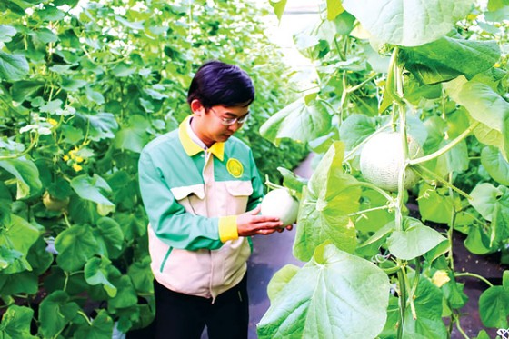 Vốn đổ vào nông nghiệp công nghệ cao ảnh 1