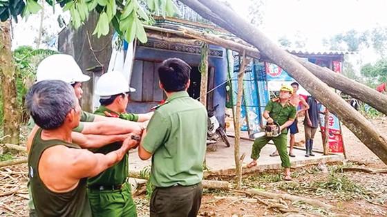 Khánh Hòa, Phú Yên - dồn sức khắc phục hậu quả bão ảnh 4