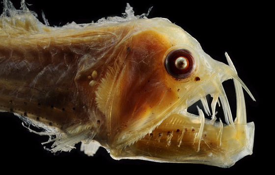 Những 'quái thú' dưới lòng đại dương