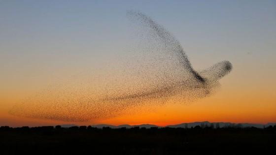 Kinh ngạc vũ điệu chim sáo đá triệu ảnh có một - Ảnh 6.