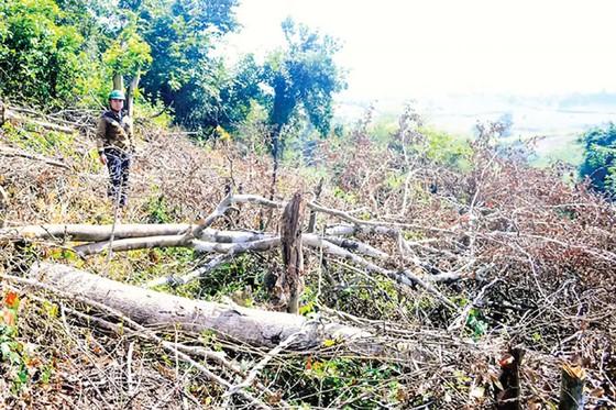 Quản lý rừng ở Phú Yên: Sai phạm cấp phép khai thác khoáng sản ảnh 1