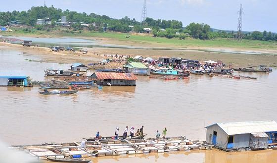 Đã có hơn 1.500 tấn cá bè trên sông La Ngà bị chết ảnh 7