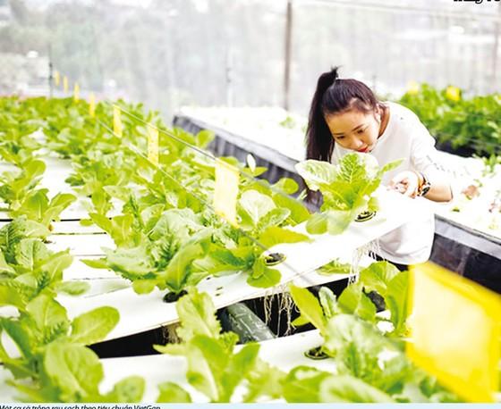 Ngành nông nghiệp hữu cơ: Vẫn loay hoay trong thế khó ảnh 1