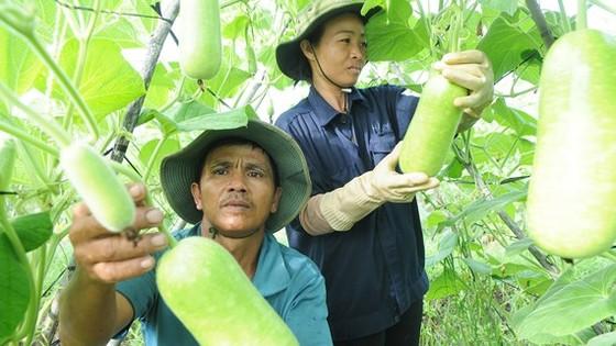 Nông sản trong nước đã chủ động đáp ứng tiêu chuẩn cho nông sản xuất khẩu vào Hàn Quốc Ảnh: CAO THĂNG
