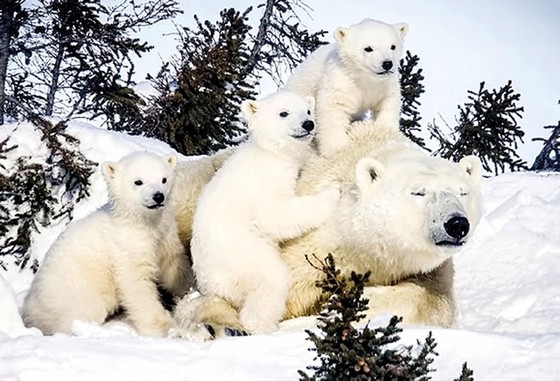 Alaska, điểm du lịch hấp dẫn ảnh 2