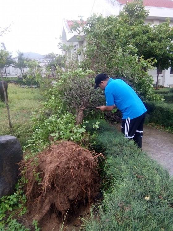 Đảo Phú Quý ngổn ngang sau trận lốc xoáy kinh hoàng ảnh 4